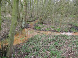 Brongebied van Itterbeek - Kwelwater