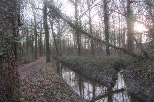 Peultenbossen - houten brugbeek